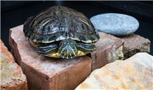 New Orleans Hotel - Hotel Turtle