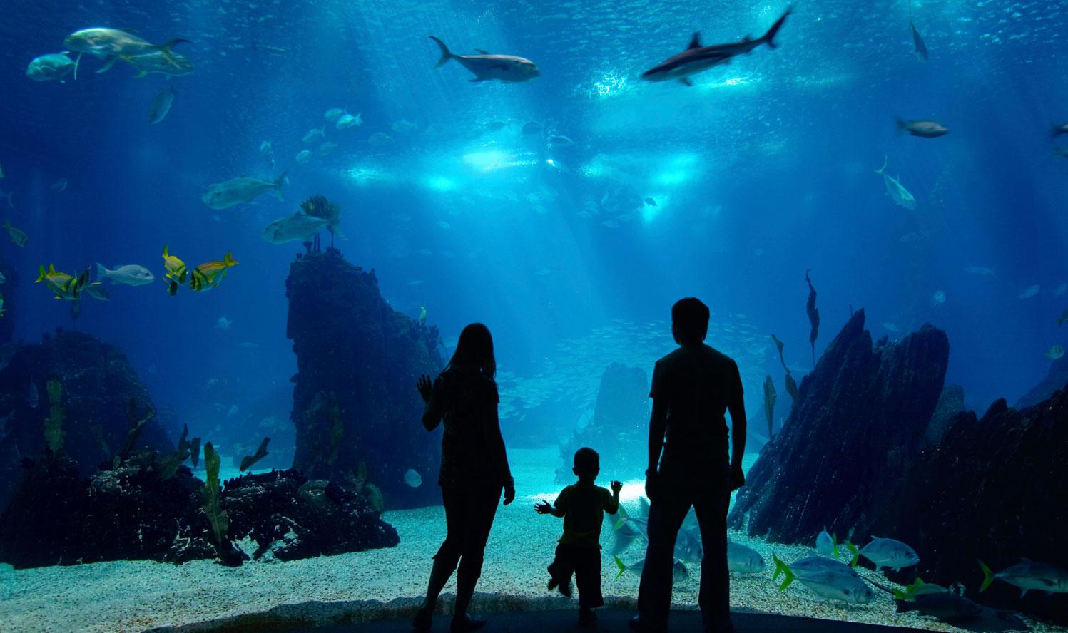 Audubon Aquarium In New Orleans Ocean Wildlife Exhibits
